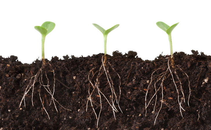 shutterstock-plant-roots